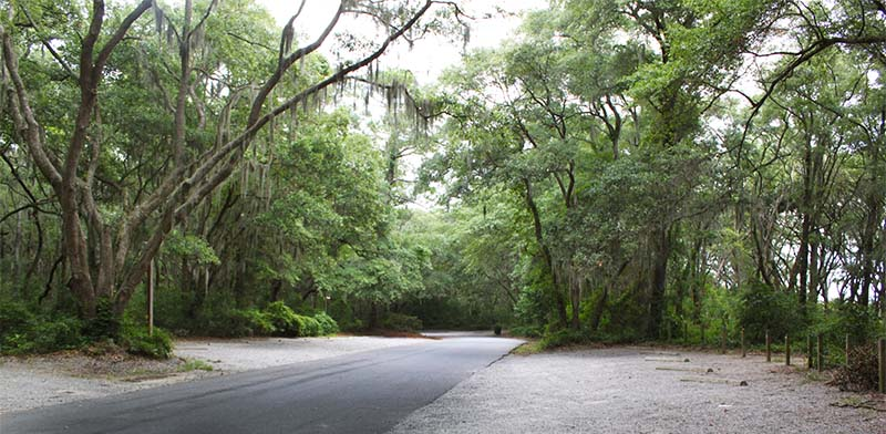 Lowcountry Forest