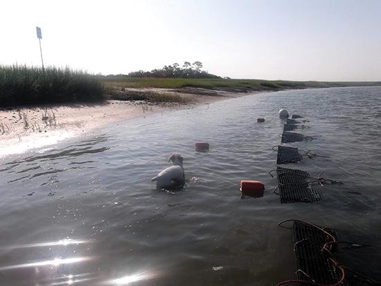 oyster farming baskets