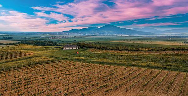 vineyard in hangary